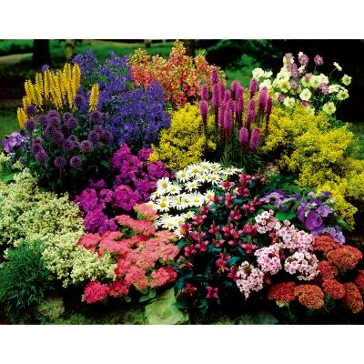 Le tapis magique fleurs de rocaille jardin sec pinterest for Fleurs de rocaille vivaces
