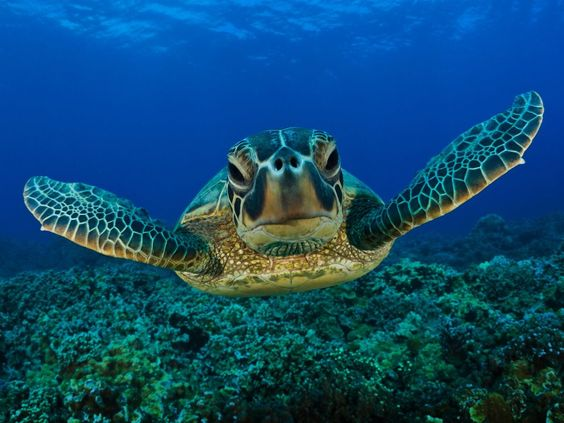 Happy World Turtle Day, from La Paz, Baja California Sur, Mexico. Picture from https://www.facebook.com/vivalapaz