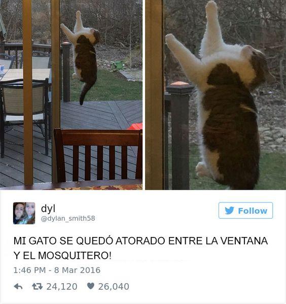 tuits sobre animales
