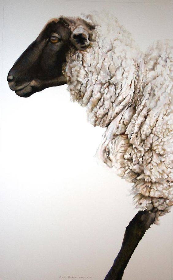 Sheep with black face and legs and white fleece