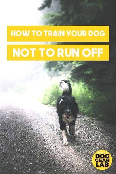 Dog Training Equipment K9 Quail Dog Training Pitbull Dog