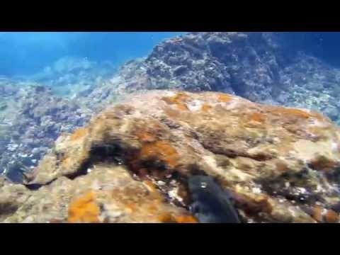 Aquí Encontrará Información Sobre Hacer Snorkel En Lanzarote Cuáles Son Los Mejores Lugares Y Condiciones Para Lanzarote Chica En La Playa Puerto Del Carmen
