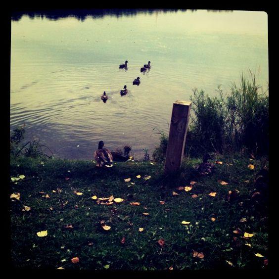 duck :)