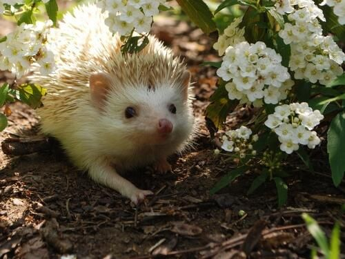 Cute hedgehog: