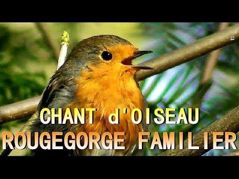 36++ Chants d oiseaux des jardins ideas in 2021