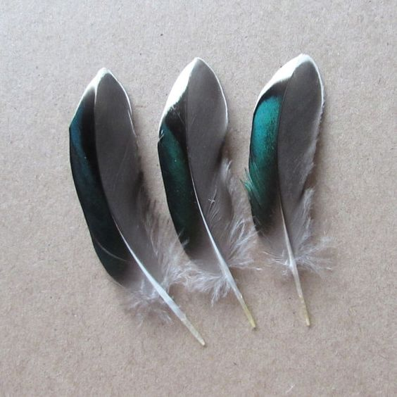 Teal Duck Feathers by feathershopuk on Etsy