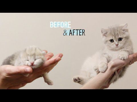 How Baby Kitten Amelia Grow 0 12 Weeks Before After