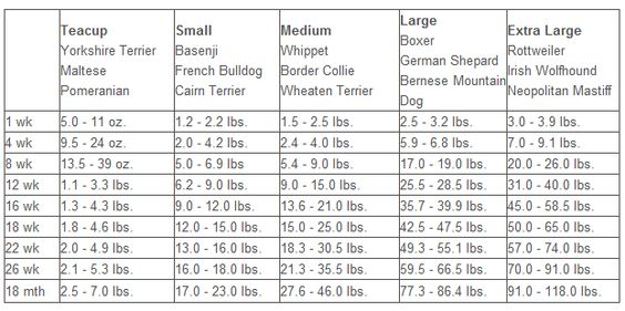 Boxer Puppy Weight Chart Exploredogscom