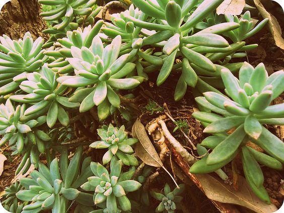 Meu jardim de suculentas!!!