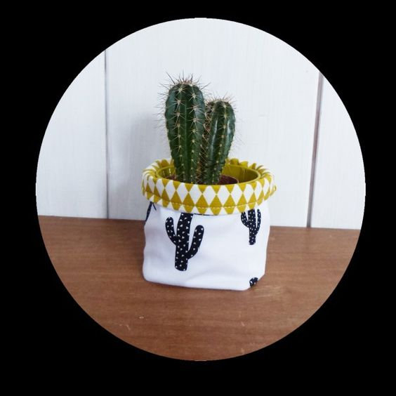 mini cactus cactus and pots on pinterest. Black Bedroom Furniture Sets. Home Design Ideas