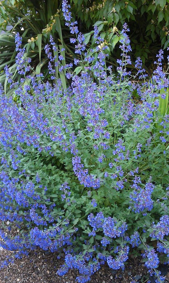 Perennial flowers for a stunning design drought tolerant for Low maintenance perennials for full sun