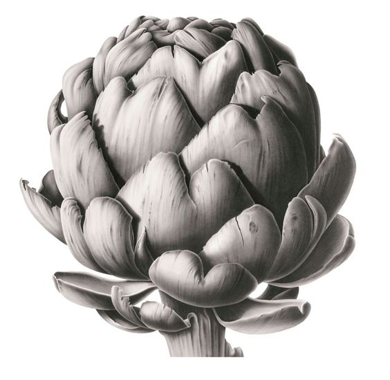 Susannah Blaxill Botanical Art Pinterest Vegetables