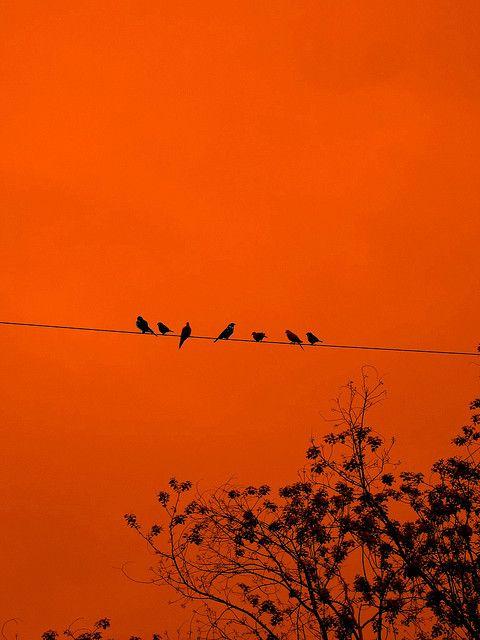 birds on a wire #orange: