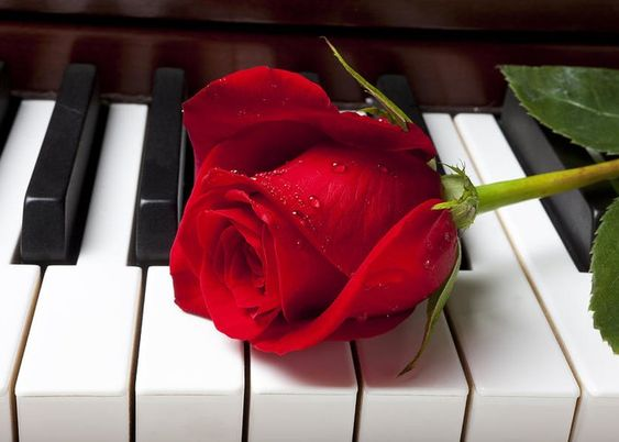Red Rose On Piano Keys Greeting Card for Sale by Garry Gay