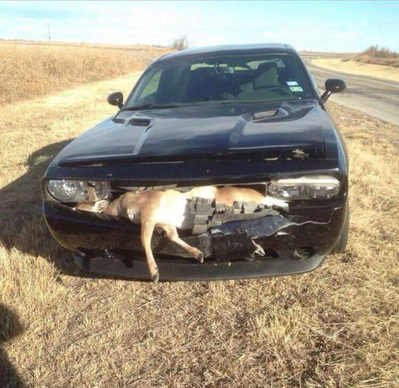 The new deer hunter...  Ouch!                                       `™`