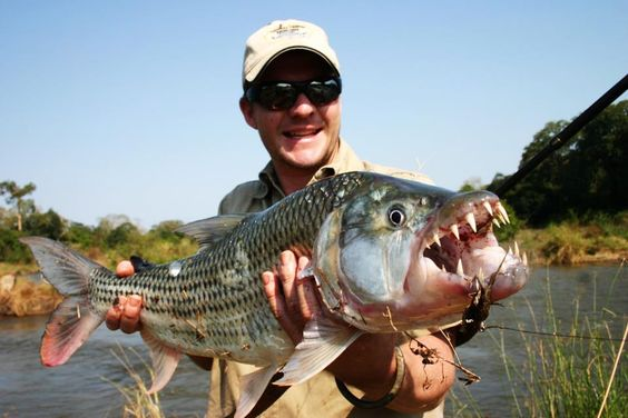 Freshwater fish the hook and fish on pinterest for Giant fish hook