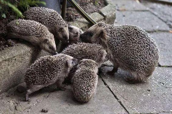 Многодетные мамочки животного мира (15 добрых фото) | PetZona.Ru | Яндекс Дзен