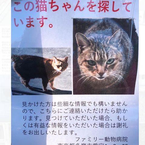 あみ Kibimomo Instagram写真と動画 Books Animals Book Cover