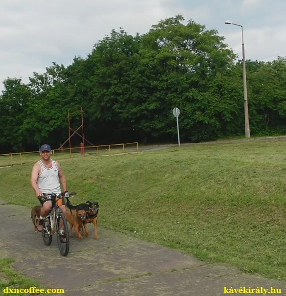 Walking my dogs on my bike is better for us all. They get more exercise and I can survive the days not getting dead-tired more than usual. :)