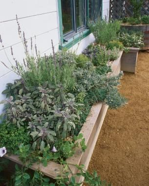 Herbs for Every Window Box   Fine Gardening