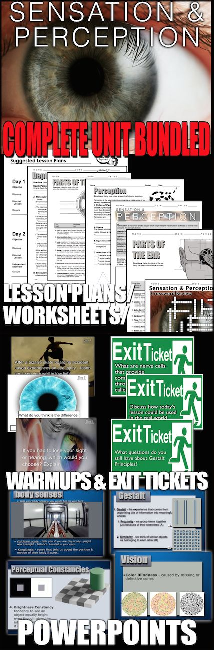 Sensation and Perception Unit: PowerPoint, Worksheets, Plans+Test ...