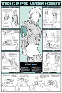 Triceps Workout Wall Chart - Fitnus Posters Inc. | Fitness ...