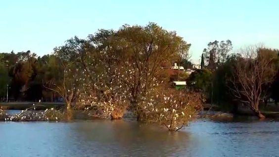 Garzas Lago Lirios otoño 2014 (3)(2), Cuautitlan Izcalli, Estado de Mexico