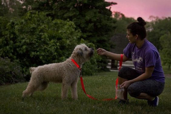 Bright LED Dog Leah By The Pet's Tech #dogs #dogsafety #thepetstech #dogwalking
