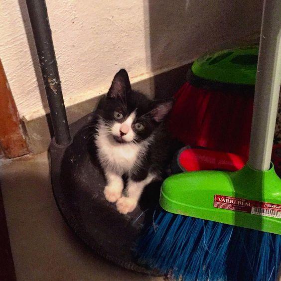 """""""A vida na ONG não é fácil pra ninguém. Vejam esse """"projeto de gato"""" que já é obrigado a ajudar até na limpeza!  #sqn #vidaboa…"""""""