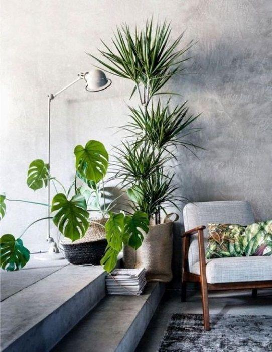15 Incredible Indoor Plants Decor Ideas