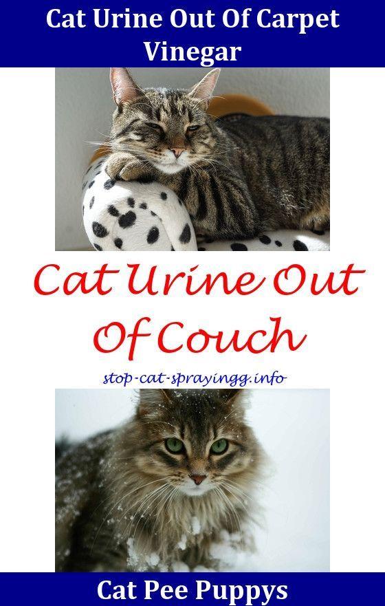 Cat Urine Remedies Cat Still Spraying After Being Neutered Cat