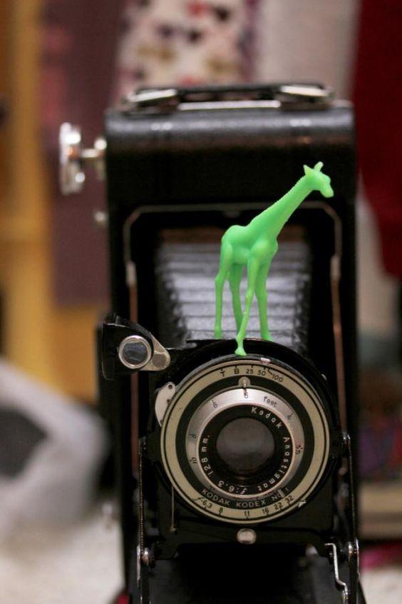 ::Giraffescapades:: #Day17 #30DoC