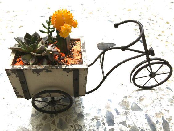 Suculentas y cactus en bici