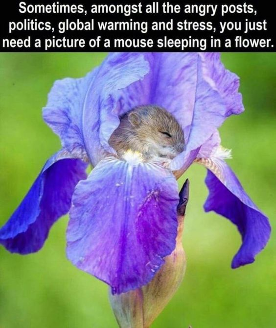 Sleeping in a flower