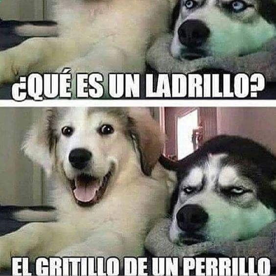 Pin By Mayra Cordero On Cute Animals Funny Dogs Funny Puns Jokes Dogs Funny Husky