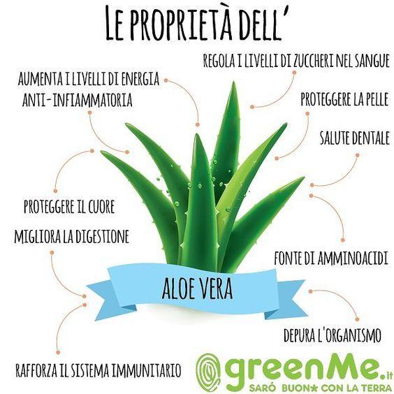 Aloe Vera Tutta La Verita Benefici E Controindicazioni Greenme It Aloe Vera Sistema Immunitario Salute E Benessere