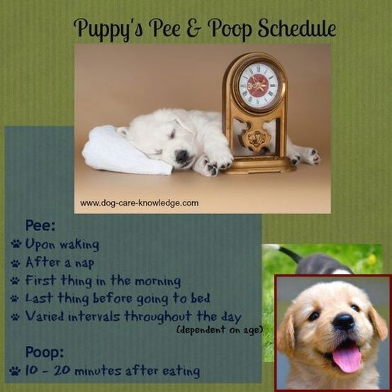Potty Training Puppy Grass And Clicker Training Dogs Reddit House Training Puppies Dog Clicker Training Dog Training
