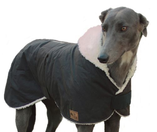 Dog Accessories Australia Pet Accessories In 2020 Greyhounds Clothes Dog Coats Waterproof Dog Coats