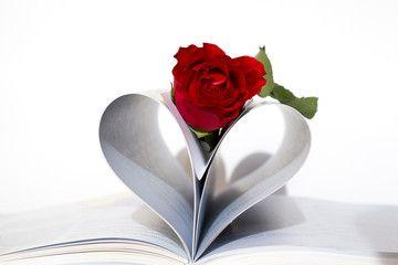 Rose in the book