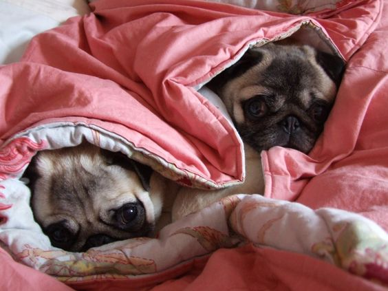 Don't get up yet - let's snuggle and snooze a bit!