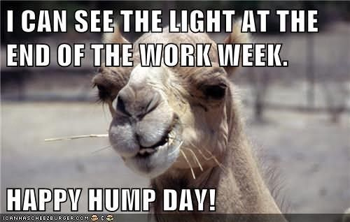 28 Funniest Happy Hump Day Memes That Makes You Fun Happy Hump Day Meme Funny Happy Memes