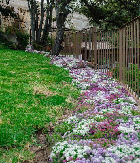 10 Ideas Para Arreglar Tu Jardin Con Poco Dinero Decorar Y Mas En 2020 Jardines Dinero Naturaleza