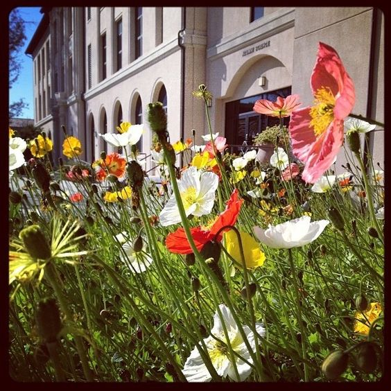 Gotta love the #flowers outside of Alumni Science!