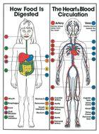 Medical biology site - skeleton and biology charts