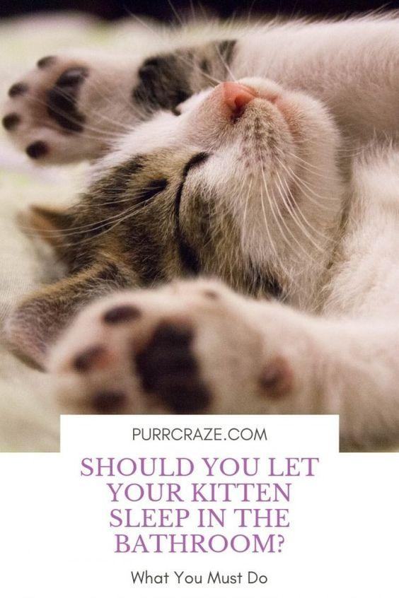 Should You Let Your Kitten Sleep In The Bathroom Purr Craze Sleeping Kitten Cute Cats Kitten Care