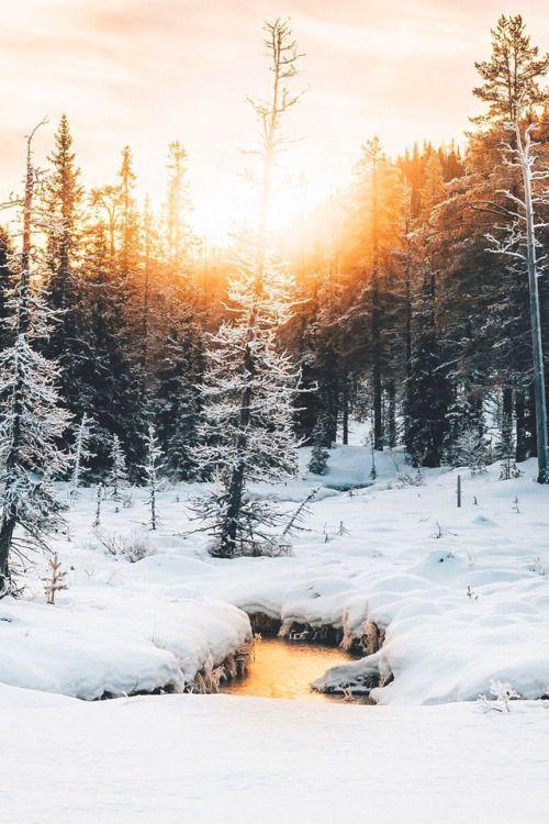 Sweden Sweden Winter Snow Forest Trees Snow Forest Winter Landscape Nature