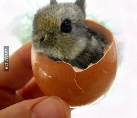Which came first? The bunny or the egg?