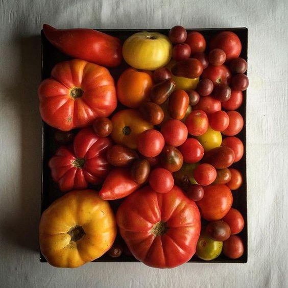 """Los voy a poner en un altar #tomates #tomatesdeverdad worship the #tomatoes @petra_mora #stilllife #instafood #foodphoto #foodfromspain #food52 #f52grams #feedfeed @thefeedfeed #riberadelebro"" Photo taken by @miriamelinvitado on Instagram, pinned via the InstaPin iOS App! http://www.instapinapp.com (09/04/2015)"