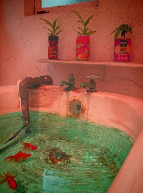 Goldfish tub environments pinterest fish tanks for Bathtub fish pond