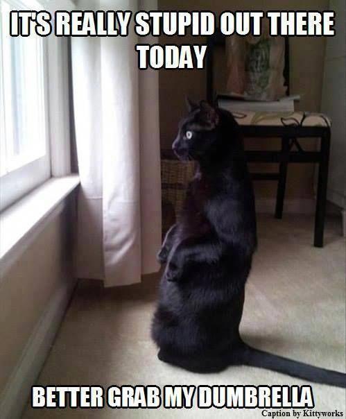 TOP 42 Funny Cats Pics #funnycats